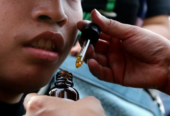 chertorivski apoyara el cultivo de marihuana 1