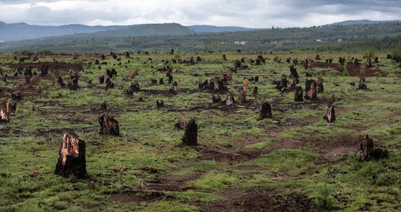 deforestacion de bosques en mexico 1