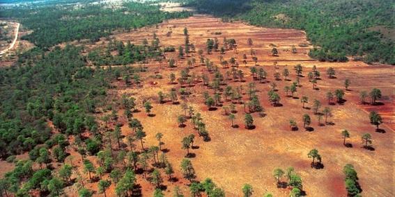 deforestacion de bosques en mexico 2
