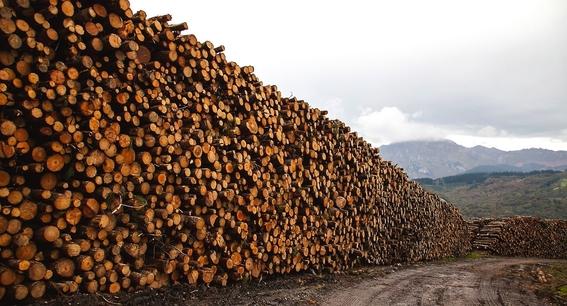 deforestacion de bosques en mexico 3