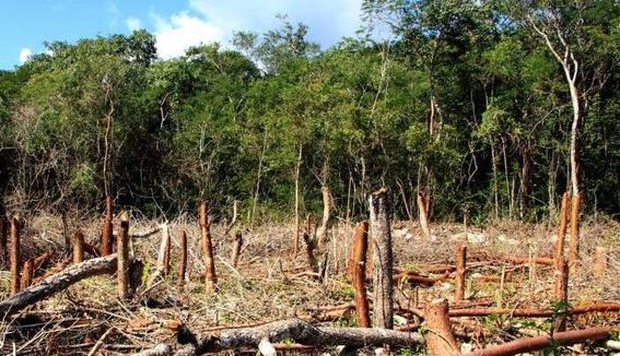deforestacion de bosques en mexico 4