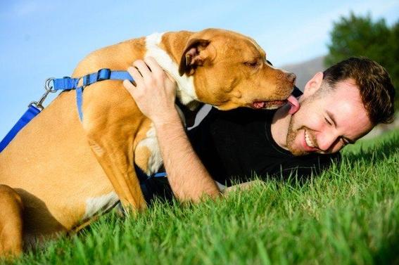 besar a tu mascota provoca cancer 2