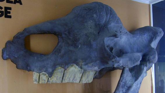 descubren restos prehistoricos por derretimiento en siberia 2