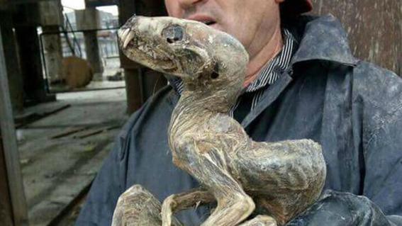 descubren restos prehistoricos por derretimiento en siberia 4