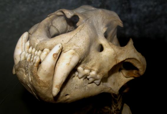 descubren restos prehistoricos por derretimiento en siberia 5