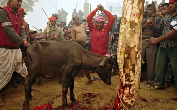 sacrificio religioso de animales 2