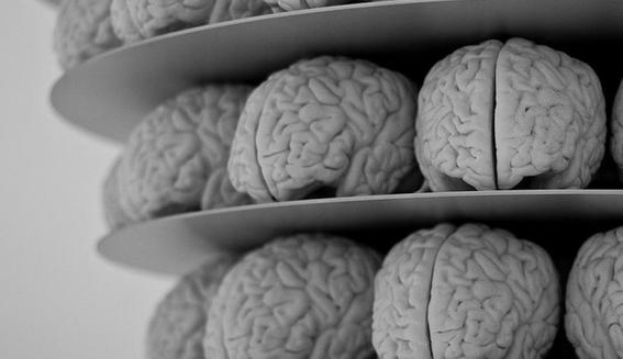 descifrar los secretos del cerebro humano 3
