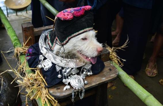 historia del pueblo miao 4