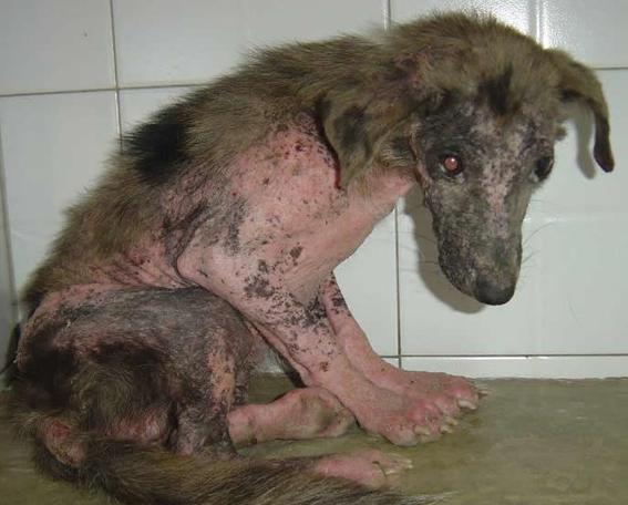 abusadores de animales como abusadores sexuales 1