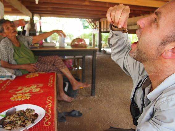 gorgojos chinos 5
