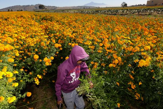 hijos de agricultores mexicanos ya no quieren trabajar el campo 2