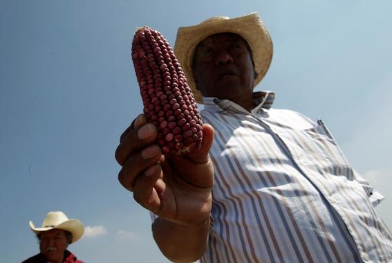 hijos de agricultores mexicanos ya no quieren trabajar el campo 5