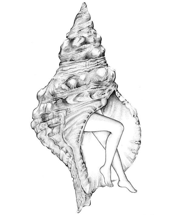 sarah norman illustrations 8