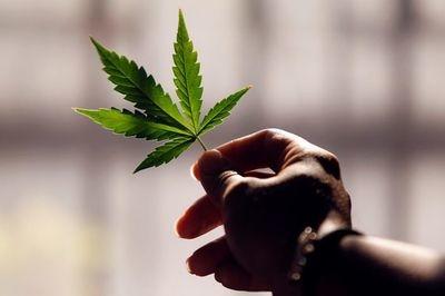 legalizacion en mexico 2