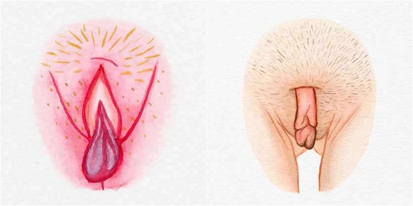Watercolor Vaginas That Explore The Diversity Of Womanhood 4