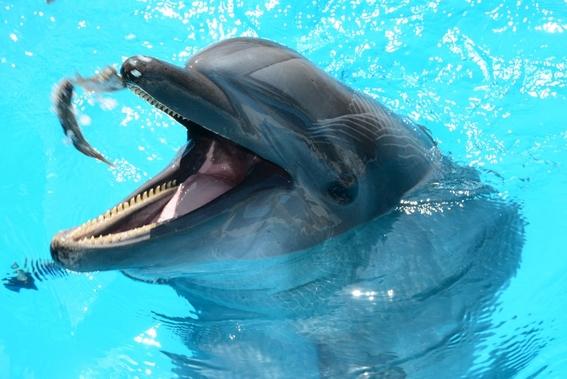 dieta de los delfines indica la salud de la tierra 1