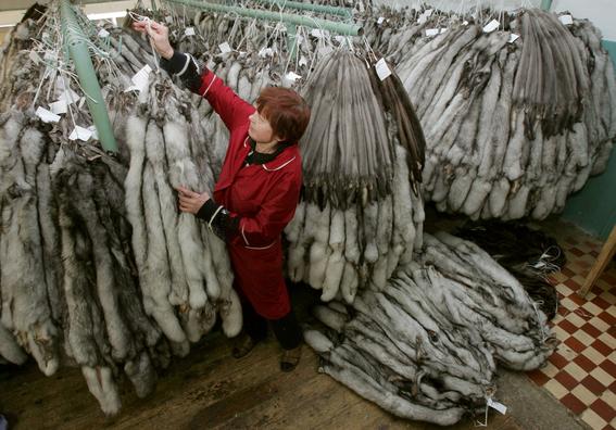 noruega prohibira produccion de pieles de animales 3