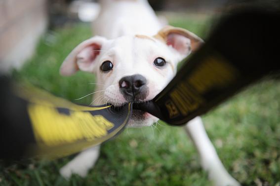 cosas que debo saber antes de adoptar un perro 5
