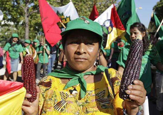 aumentan los asesinatos de defensores de los bosques en mexico 5