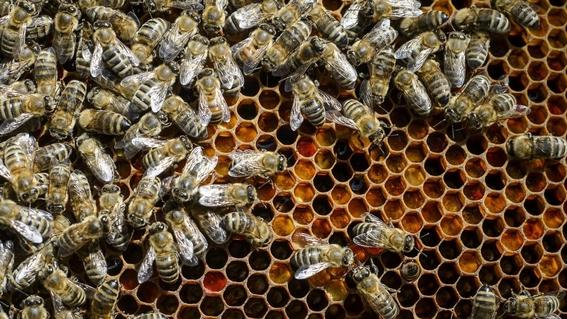 dos adolescentes de iowa fueron arrestrados por matar 500 mil abejas 1