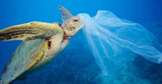 productos para reducir tu produccion de basura 2