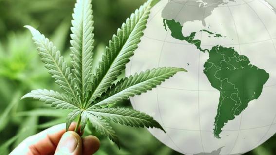 proponen legalizar marihuana en baja california 1