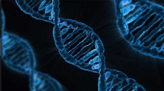 cromosoma y podria desaparecer 1