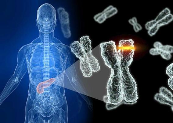 cromosoma y podria desaparecer 2