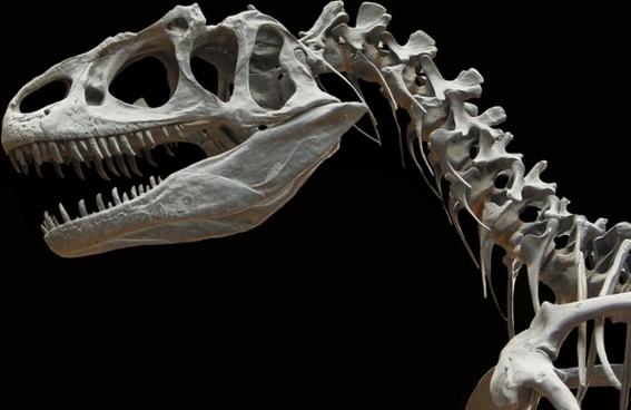 bone wars 4