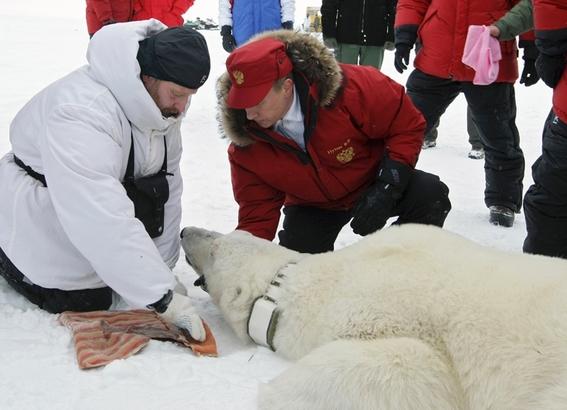 testigos de la extincion de los oso polares 3