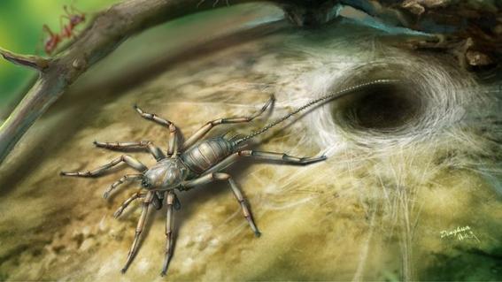 fosil de mas de 100 millones de anos devela el pasado de las aranas 2