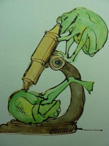 joy of frogs 7