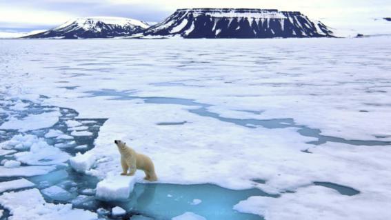 testigos de la extincion de los oso polares 2