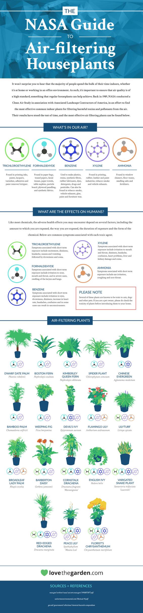 plantas que purifican el aire 6