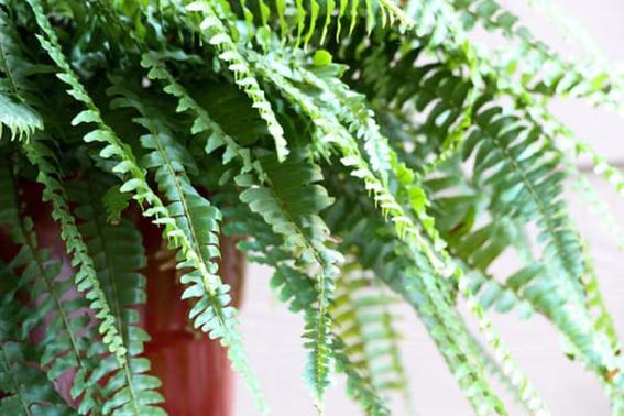 plantas que purifican el aire 3