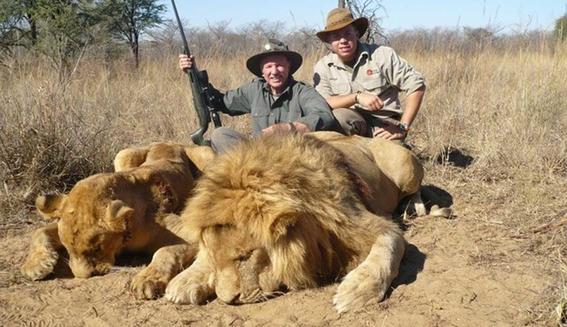 manada de leones se comio a su cazador 1