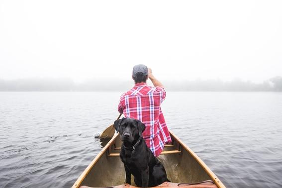 consejos para viajar con tu mascota 4