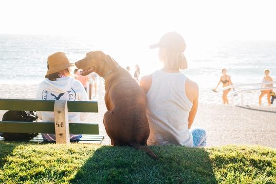 consejos para viajar con tu mascota 5