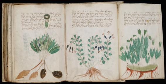 manuscrito voynich 1