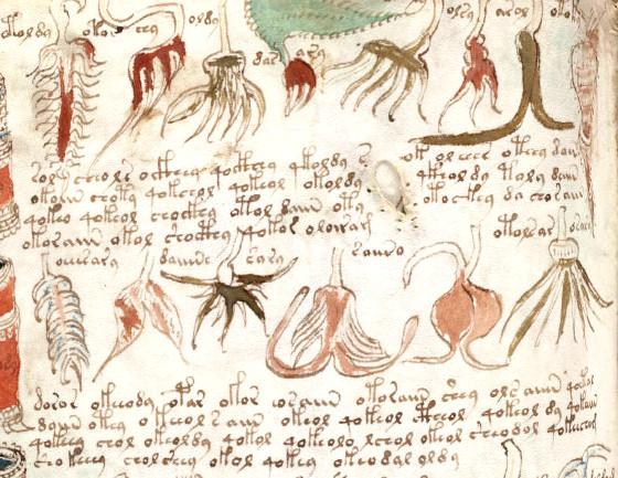 manuscrito voynich 2