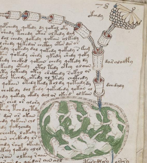 manuscrito voynich 4