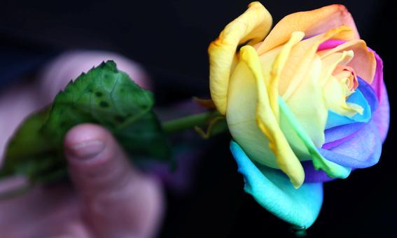 matrimonio igualitario disminuye suicidios en comunidad lgbt 2