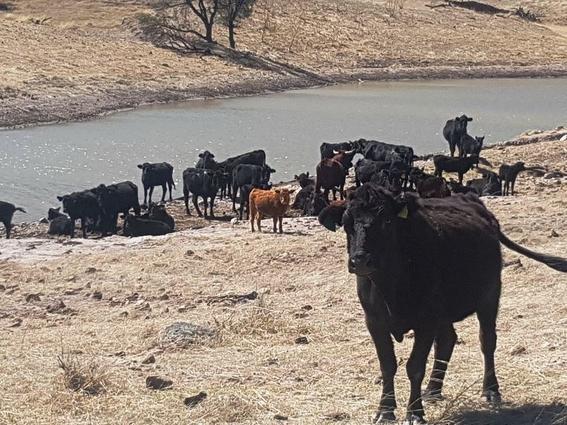 incautan rancho con bisontes a cesar duarte 2