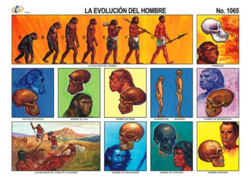 evolucion humana 1
