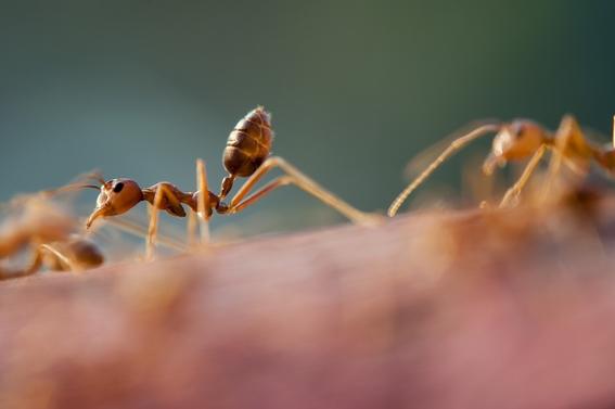 hormigas salvan a mujer que cayo de paracaidas 2