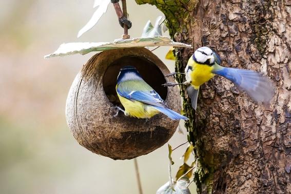 alimentar a las aves es humano pero puede ser un riesgo para la salud 1