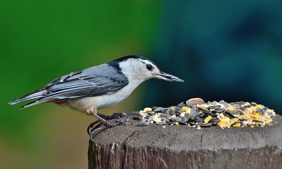 alimentar a las aves es humano pero puede ser un riesgo para la salud 2