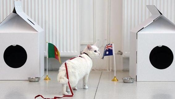 aquiles gato sordo nombrado oraculo del mundial de rusia 1