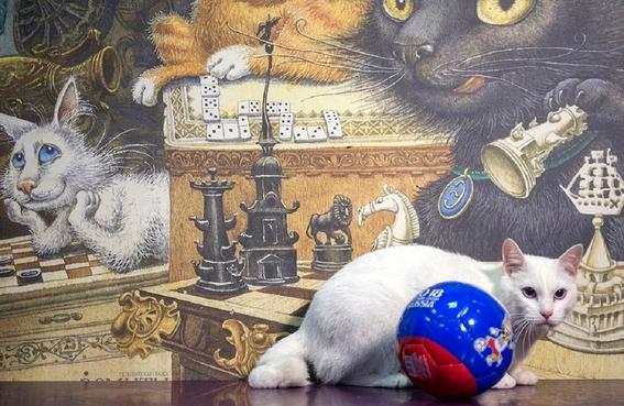 aquiles gato sordo nombrado oraculo del mundial de rusia 3