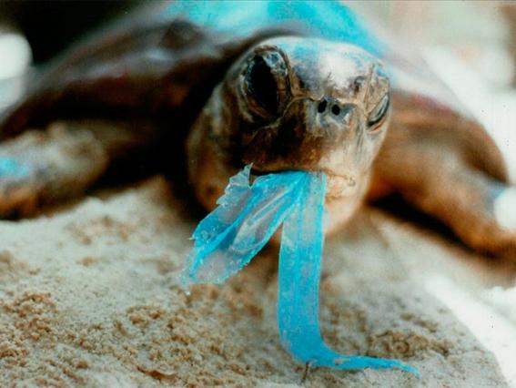 india prohibe el uso de plasticos desechables 2